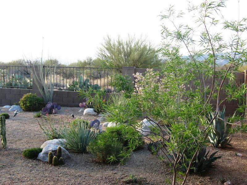 Cole Landscape And Design Arizona