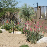 The Cole residence won 2nd place in 2011 for the Professional Landscape Category in the Arizona-Sonora Desert Museum Xeriscape contest.