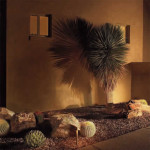 Up light on Yucca creates shadow on wall | 2005 ALCA Judges Award