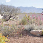 New plantings mixed with existing plants to create a desert garden