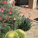 Golden Barrel Cactus and Blue Glow Agave | 2010 Xeriscape Award