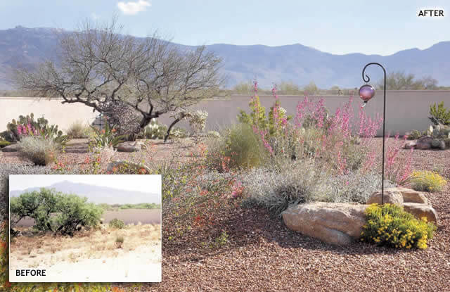 Landscape Before Amp After Gallery Tucson Az Sonoran
