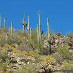 Zone 4: Mid-Altitude Desert