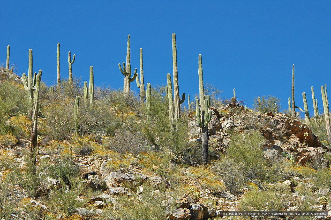 What Are The Climates Of Arizona Sonoran Gardens Inc