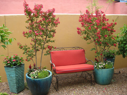 The Contained Gardener, a service of Sonoran Gardens Landscape & Design in Tucson, Arizona