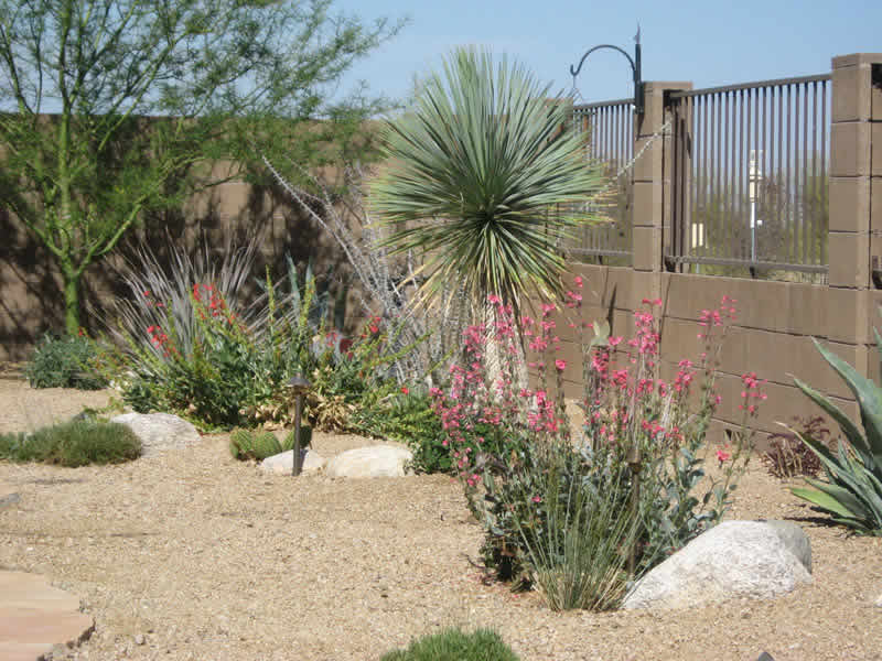 Garden Ideas Arizona landscape design tucson, az | sonoran gardens inc.