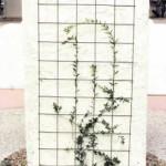 Wire mesh trellis for vine