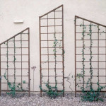 Ornamental iron trellises for vines on house wall