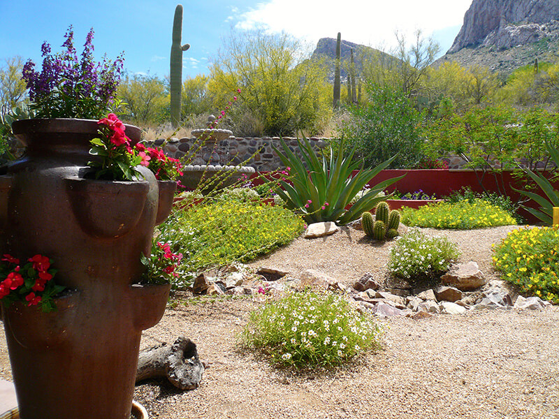 The Nacarati Residence - After - This entire project received the 2015  Award of Distinction from - Landscape Design And Construction By Sonoran Gardens, Inc. Tucson