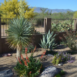 Thirty-Sixth Annual Arizona Excellence in Landscaping Awards Program | Judges Award | Single Family Residential Installation $25,001 - $50,000 | Awarded to: Landscape Design West, LLC - Shelly Abbott, MLA, APLD & Sonoran Gardens, Inc. | The Cole Residence Colorful Desert Pollinator Garden