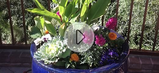 Watch our short video on how we do it, featuring our pot specialist Martha Ciaccio. Video thumb